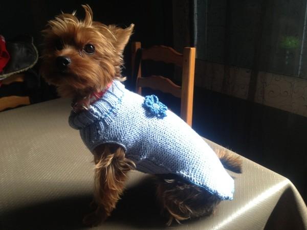 pulls pour chiens au tricot. Black Bedroom Furniture Sets. Home Design Ideas