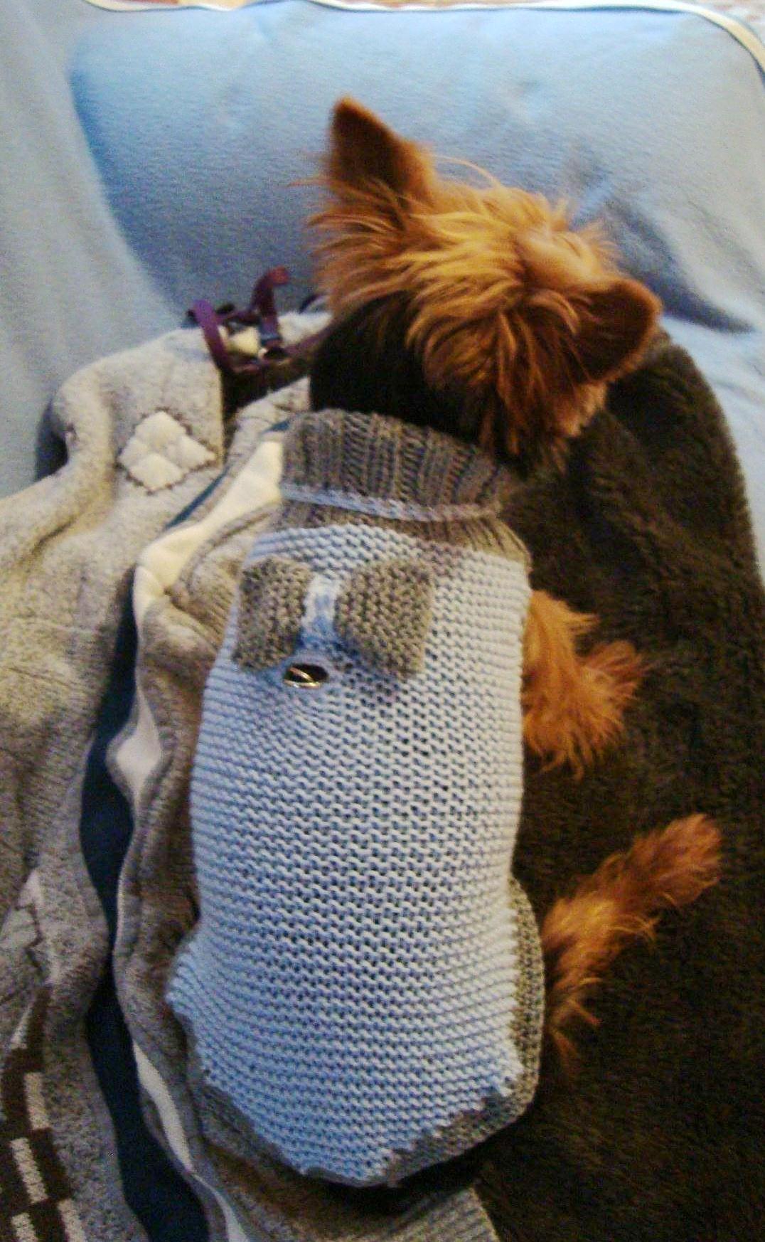 Pulls pour chiens au tricot - Petit chien gratuit ...